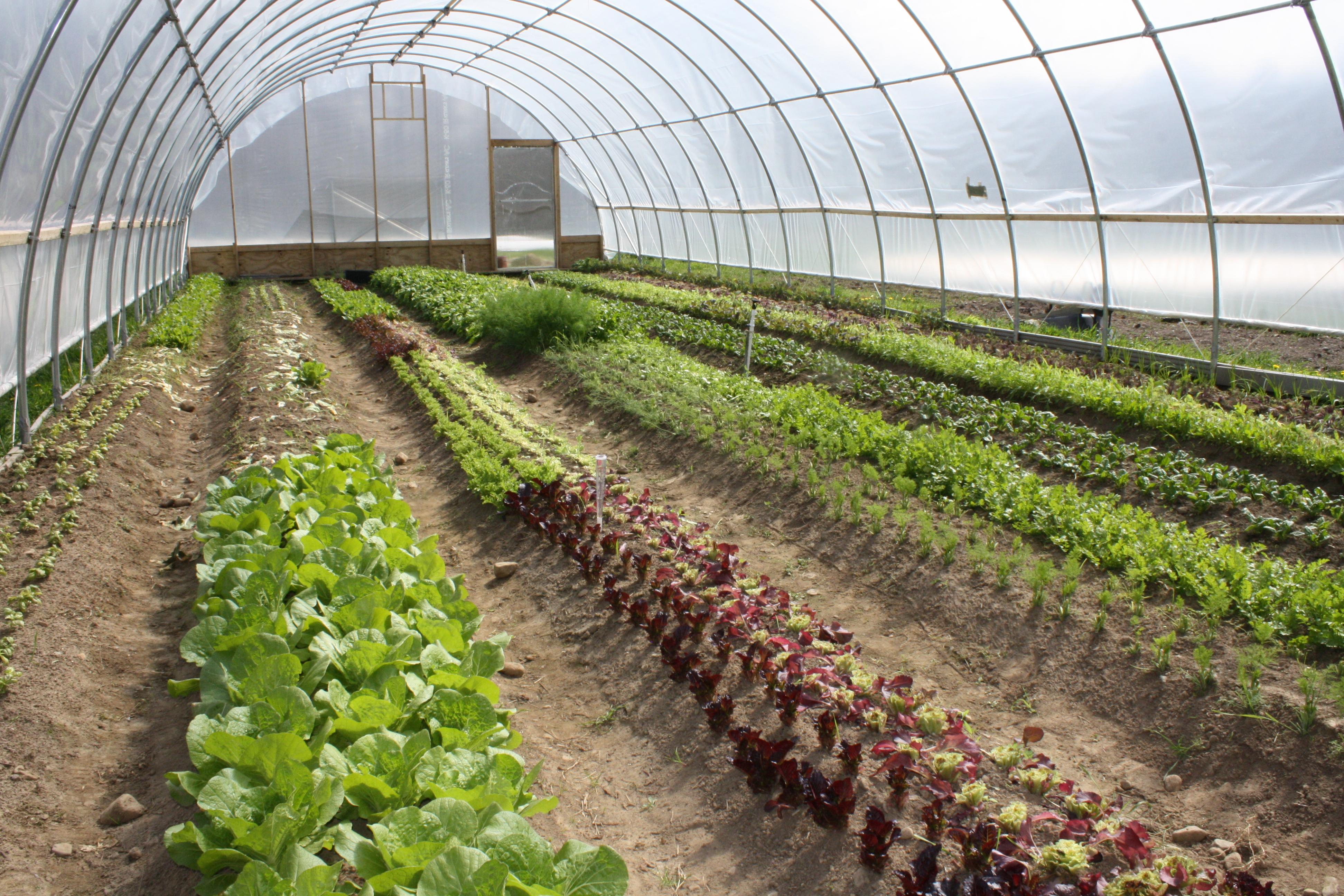 Classificação das hortaliças - Plantas e Hortaliças