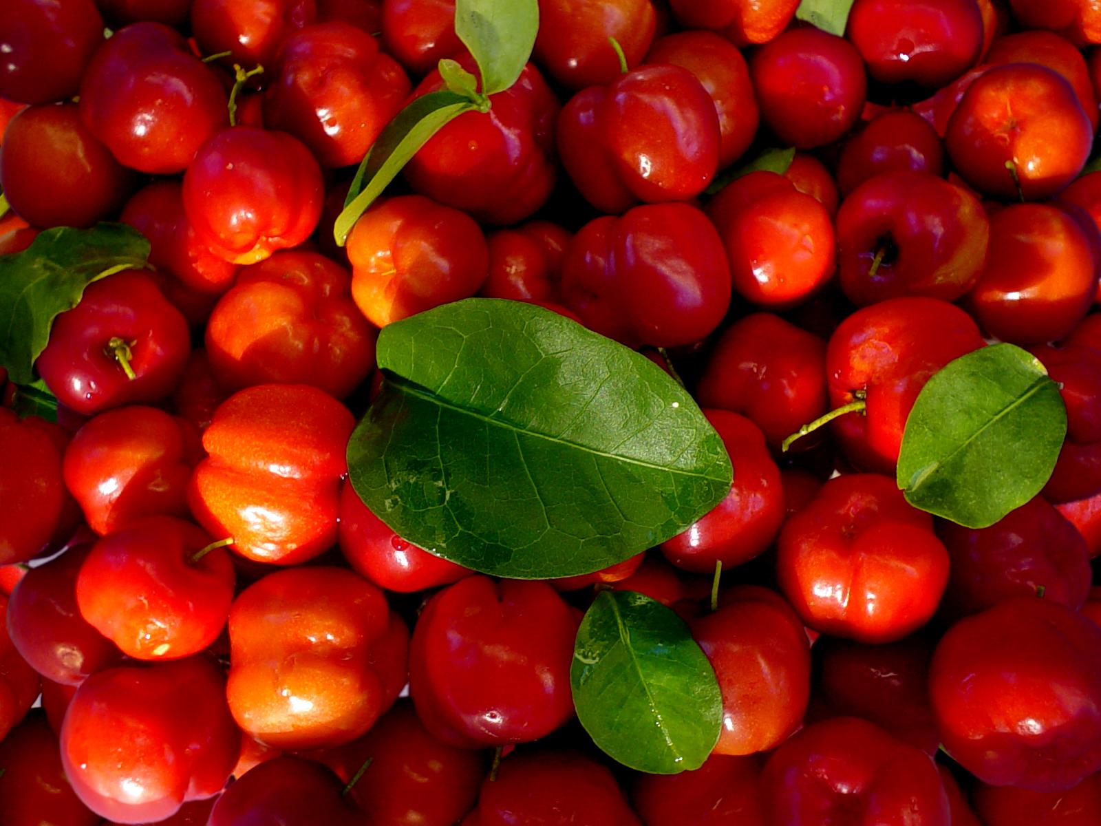Planta medicinal – Acerola