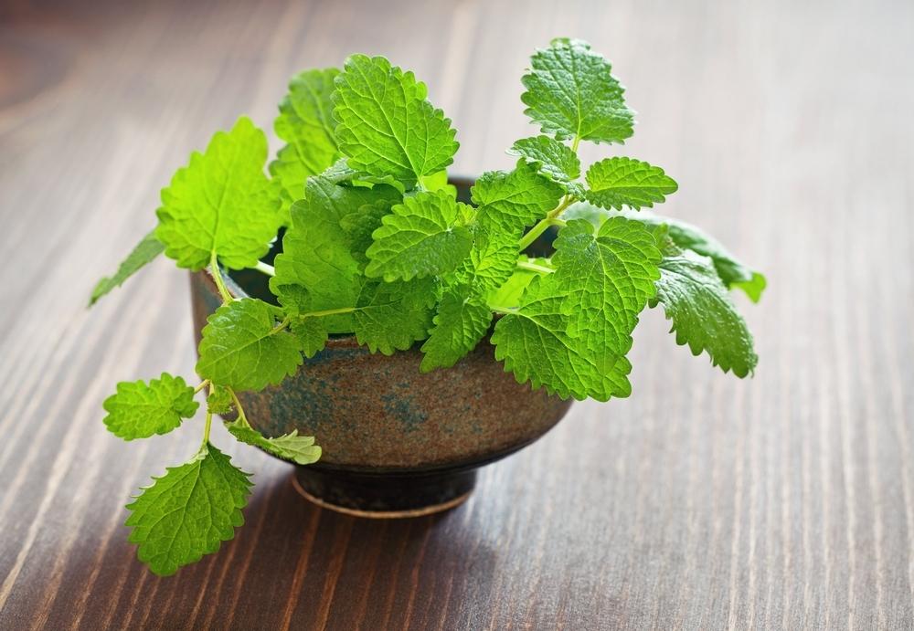 Planta medicinal – Erva-Cidreira