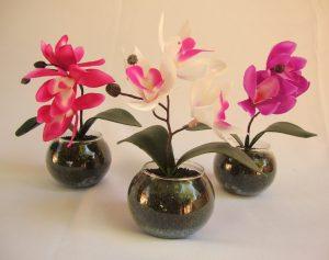 Como Cuidar de Orquídeas no Vaso