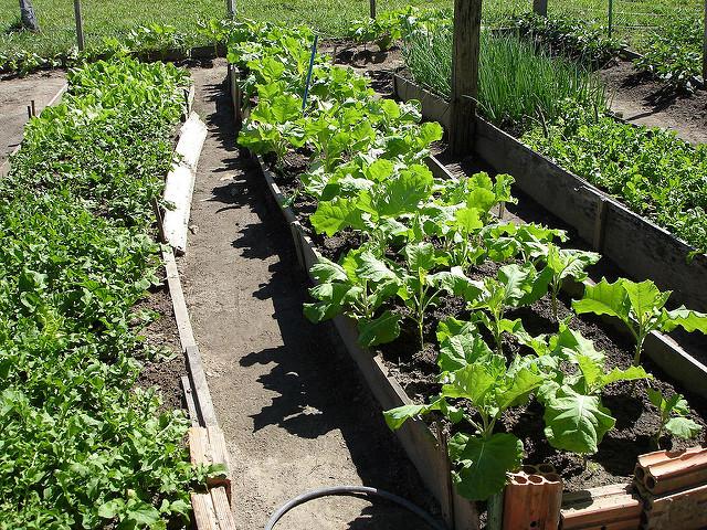 Como Cultivar Hortaliças Orgânicas